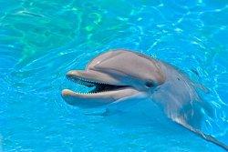 dolphin82b7