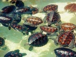 turtle-farm82b7