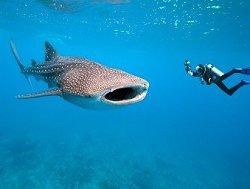 whale-shark82b7